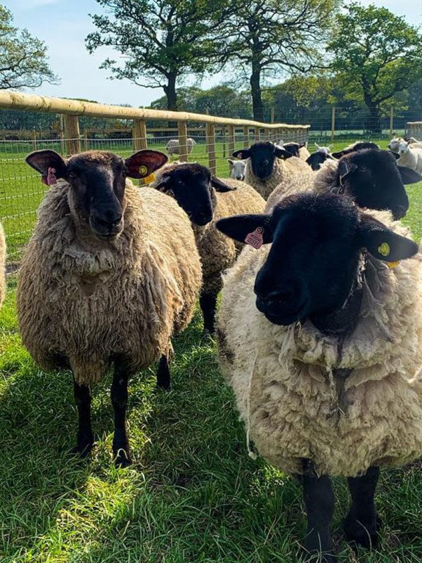 Meet all your Farm Yard Favourites